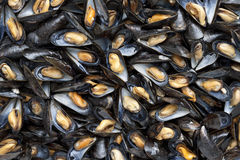 Cooked mussels full frame Royalty Free Stock Photography