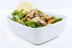 Cooked mussels with lemon Stock Image