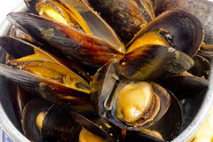 Cooked Mussels Macro Stock Photos