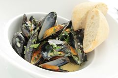 Cooked mussels meal Stock Images