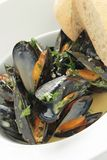Cooked mussels meal Stock Image