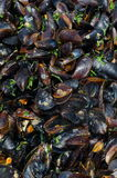 Cooked mussels (Moules Marinieres) Stock Photography