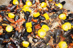 Cooked mussels on the plate Stock Photography