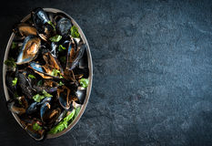 Cooked mussels in the plate Stock Photos