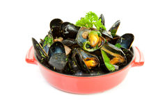Cooked mussels in red casserole Stock Images