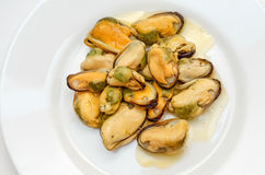 Cooked mussels. Top view of white plate full of cooked Mussels Royalty Free Stock Images
