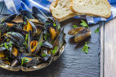 Cooked mussels Royalty Free Stock Photos