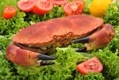 cooked orkney crab on green salad Stock Photos