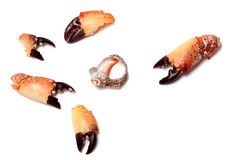 Cooked pincers from crab and empty broken rapana shell Royalty Free Stock Image