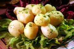Cooked potato. With salt, radish - chicory, onion and persley for smell and decoration. This is traditional old dinner royalty free stock photos