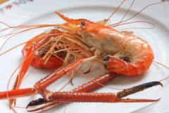 Cooked prawn Stock Images