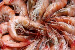 Cooked prawn Royalty Free Stock Images