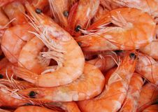 Cooked prawns. Background of fresh cooked prawns at a fish market Stock Images