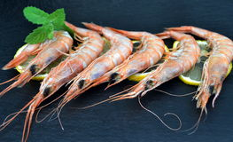 Cooked prawns on black plate Stock Images