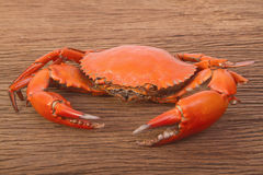 Cooked red crab Stock Photography