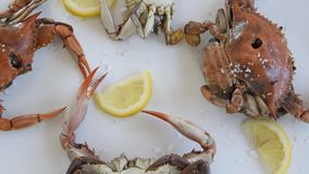 Cooked red crabs, delicious healthy seafood. Cooked red crabs on white background, delicious healthy seafood stock video