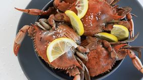 Cooked red crabs, delicious healthy seafood. Cooked red crabs on white background, delicious healthy seafood stock video footage