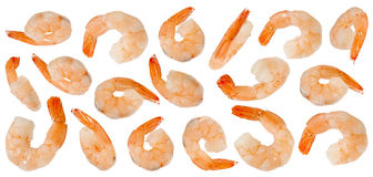 Cooked refined shrimps Stock Photo