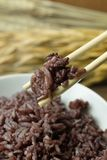 A Cooked rice berry ,Whole grain rice Thai black jasmine rice in. Cooked rice berry ,Whole grain rice Thai black jasmine rice inbowl on wood table royalty free stock photos
