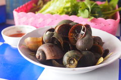 Boiled river snail thai food. Cookes river snail stew in white wine in a pan Royalty Free Stock Image
