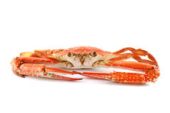 Cooked Sand Crab Royalty Free Stock Images
