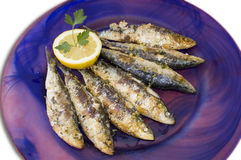 Cooked sardines. Plate  for restaurant Royalty Free Stock Image