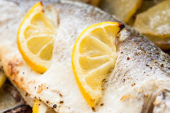 Cooked seabass. Stock Photo