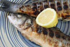 Cooked seabass Stock Images