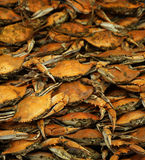 Cooked seasoned blue crabs Stock Photos