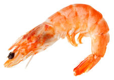 Cooked shelled tiger shrimp Stock Images