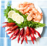 Cooked shrimp and crayfish on plate close up Royalty Free Stock Photos