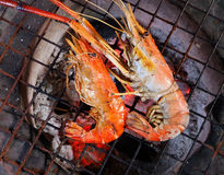 Cooked shrimp grilled on the skewer Royalty Free Stock Photo