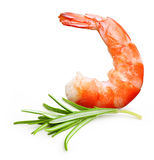 Cooked shrimp isolated . Royalty Free Stock Photography