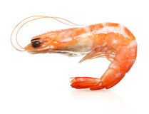 Cooked shrimp isolated . Stock Image