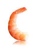Cooked shrimp isolated Stock Photography