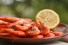 Cooked shrimp or prawns. Low angle view of a plate of cooked shrimp or prawns served with lemon Stock Images