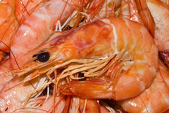Cooked shrimp, prawns close up. Plate of cooked shrimp or prawns Royalty Free Stock Photography