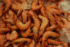 Cooked shrimp . Royalty Free Stock Photo