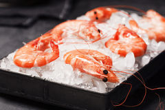 Cooked Shrimp in Tray Filled with Ice Royalty Free Stock Image