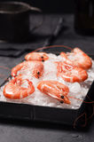 Cooked Shrimp in Tray Filled with Ice Royalty Free Stock Photography
