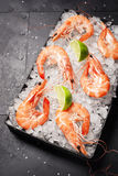 Cooked Shrimp in Tray Filled with Ice Stock Image