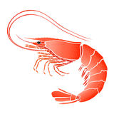 Cooked shrimp  on white Royalty Free Stock Image