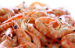 Cooked shrimps. Cooked red shrimps. Close-up Stock Images