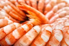 Cooked shrimps closeup Stock Photography