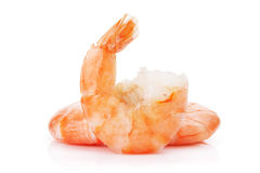 Cooked shrimps Stock Images