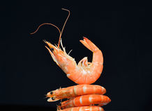 Cooked shrimps,prawns. With seasonings on black background royalty free stock photos