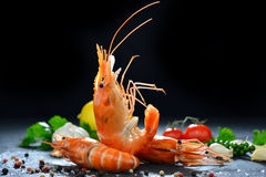 Cooked shrimps,prawns Royalty Free Stock Images