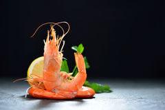 Cooked shrimps,prawns Stock Photography