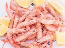 Cooked shrimps, seafood Royalty Free Stock Photos