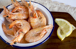 Cooked shrimps with slices of lemon Stock Images